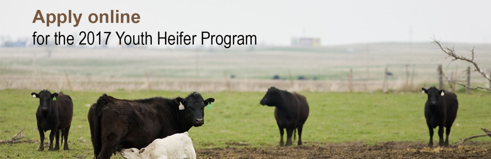 Youth Heifer Home Page